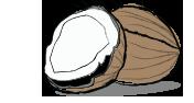 Kókuszzsír (kókuszolaj)