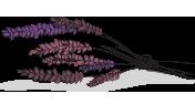 Levendula (virág és illóolaj)